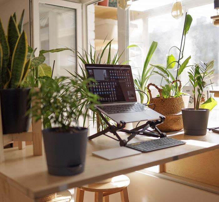 Trabajar cómodo y con plantas desde casa